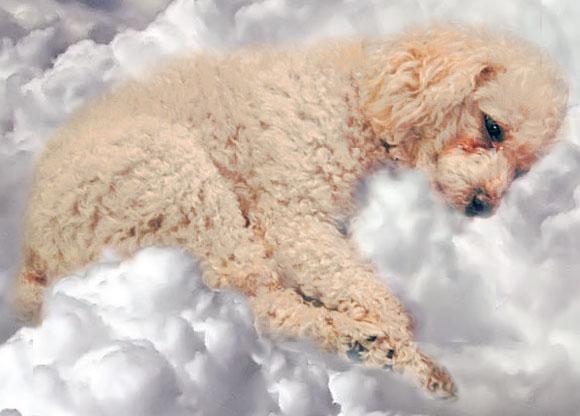 Taggy sur sa couche de nuage